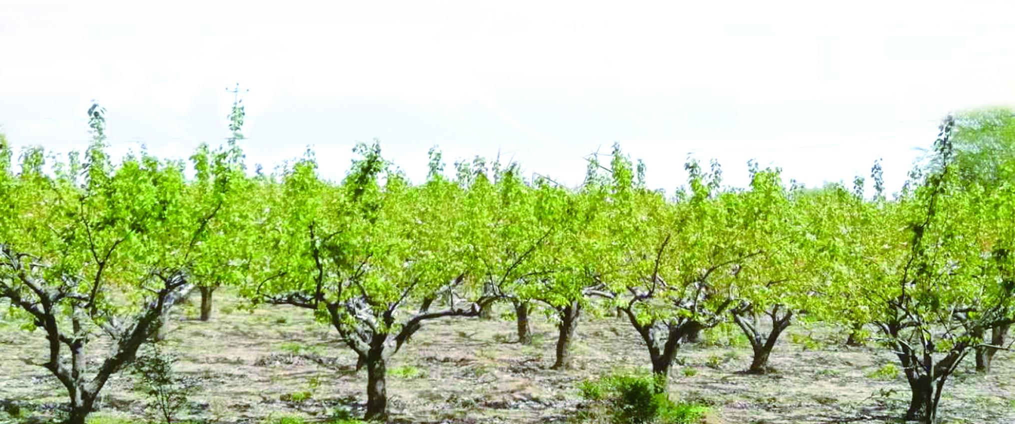 紧抓春季植树造林 饶阳县深入推进省级森林城市创建