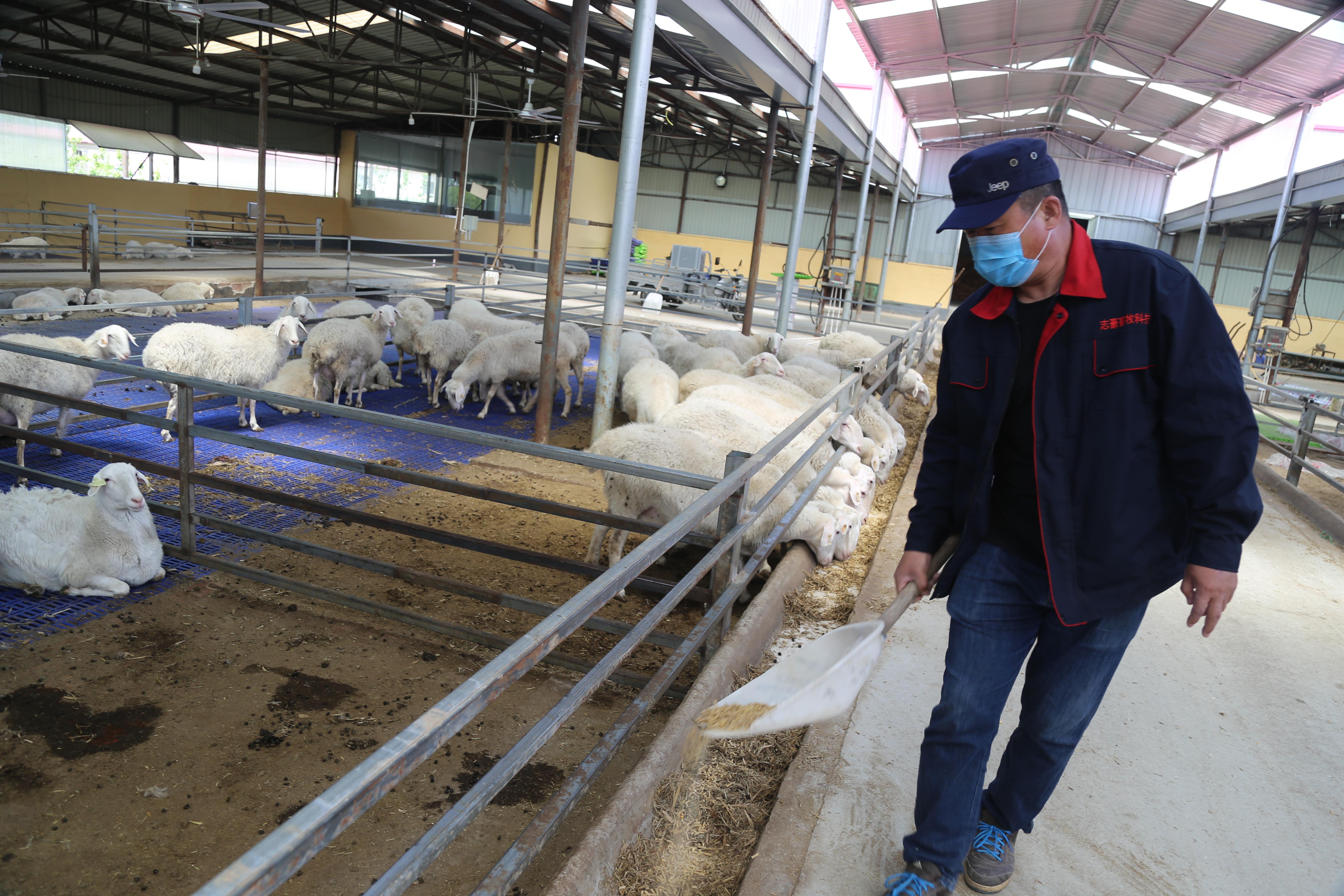 武邑县肉羊产业服务中心成立